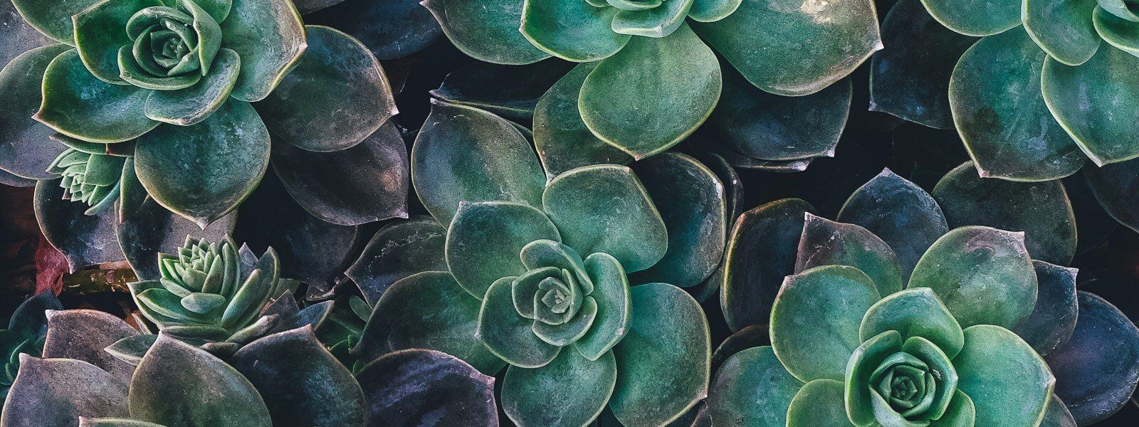 Plantes pour dormir : Découvrez le top 10 !