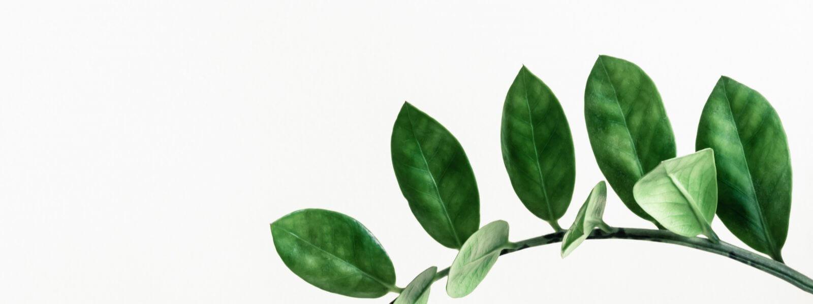 Homéopathie sommeil : tout savoir pour mieux dormir