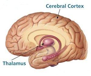 cerveau bruit rose