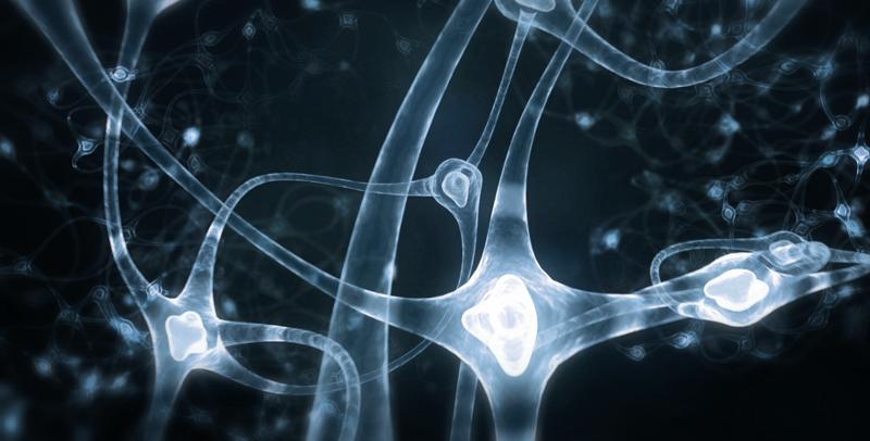 cerveau connexion neurones