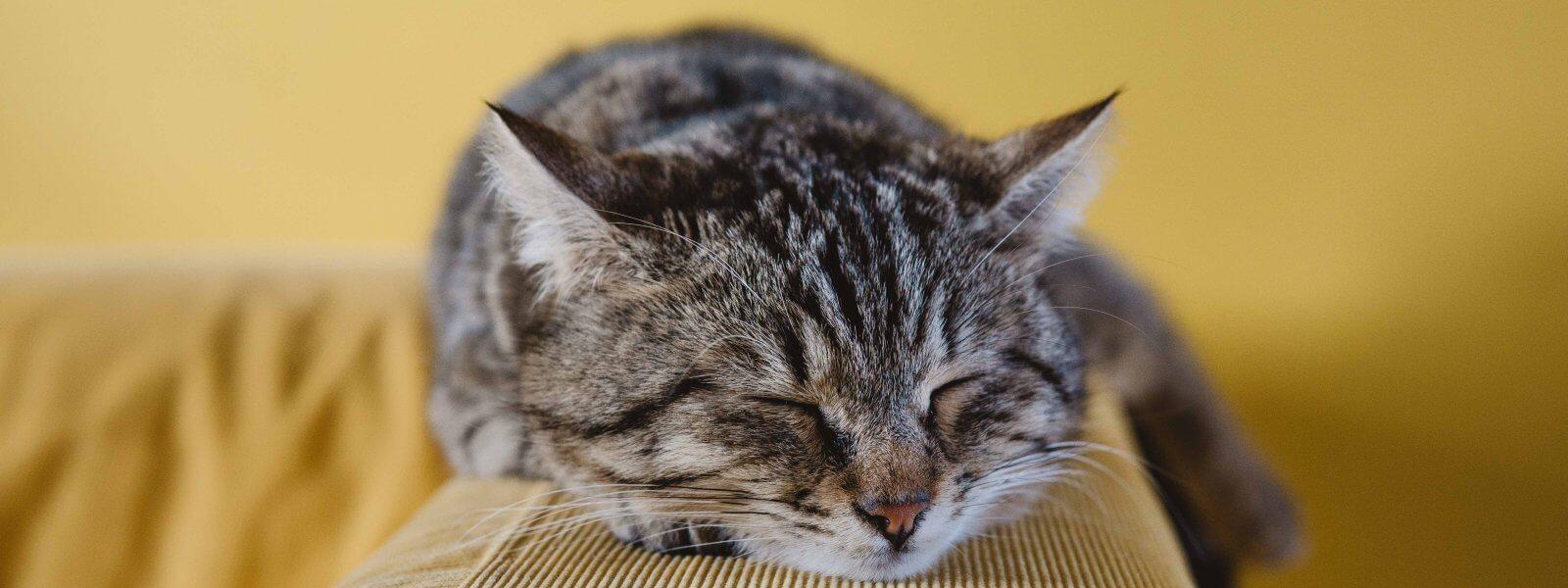 3 fascinating sleep facts